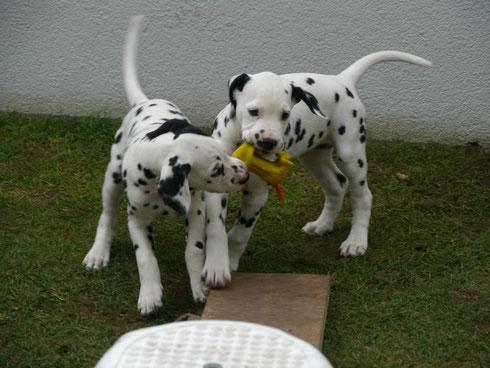 """Frau Schwarz und Frau Rot """"erledigen"""" den gelben Quietschhund"""