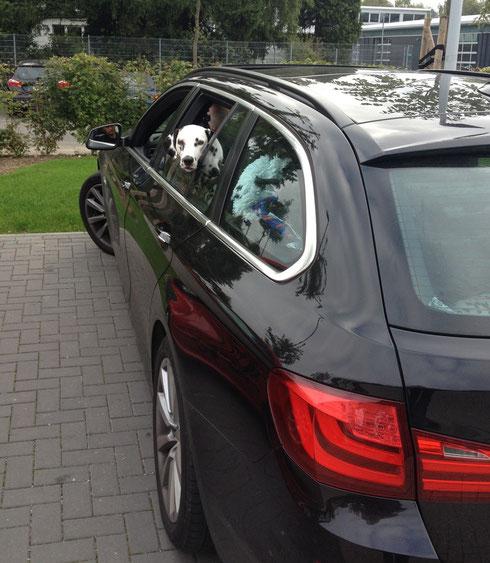 Hella ist schon wieder fit und wartet im Auto auf die gehörgetestete Verwandtschaft...