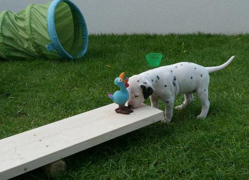 Frau Blau begutachtet neugierig die Wippe und das Huhn