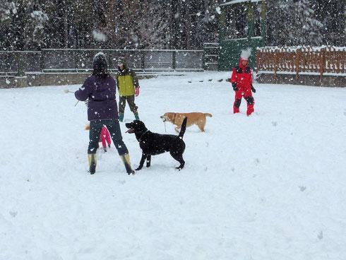 雪の中でも遊びます