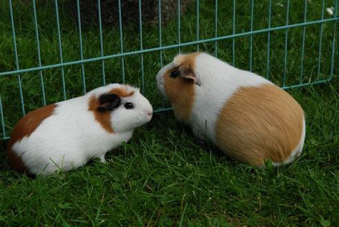 Violetta und ihre neue Freundin Viola...