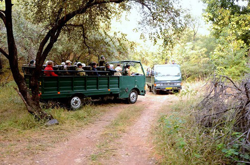 2013 Ranthambore Tiger Preserve - Waiting and Watching for Royal Bengal Tigers