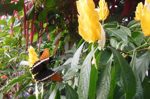 Butterflies are Free in this Tropical Greenhouse Paradise