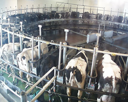 2009 Our Visit to Kreider Farm During Milking Time was Udderly Fantastic