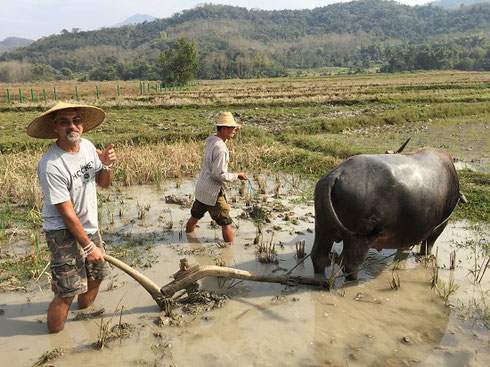 2015 One of our travelers gets hands-on experience plowing with a water buffalo