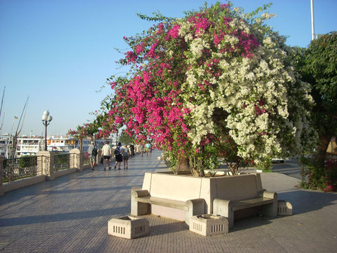 2009 A Stroll Down the Corniche at Luxor is an Unforgettable Experience