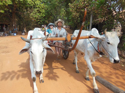 2015 We Took a rather bumpy Oxcart Ride as part of our Tour of Southeast Asia