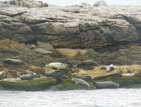 2015 Luck is with us When we get to See Lots of Seals on our Harbor Cruise