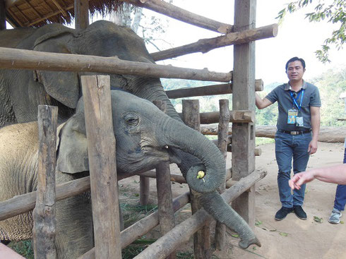 2015 We were allowed to feed bananas to this tiny elephant in the camp nursery