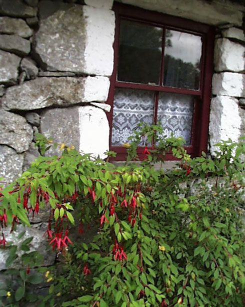 2007 This Stone Cottage Window, so Typical of Ireland, is in Bunratty Village