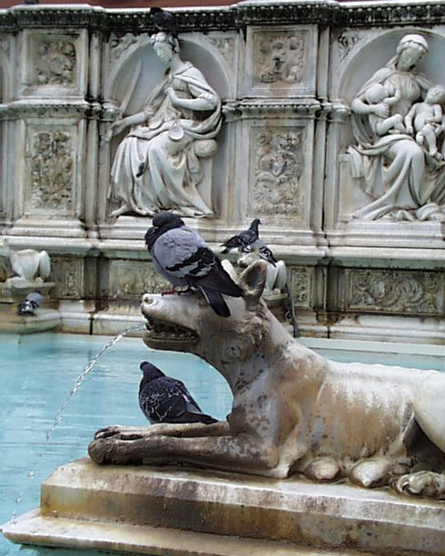 2005 The She-Wolf in Siena's Famous Fountain is usually Covered with Pigeons