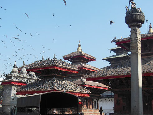 2013 Thousands of Pigeons on the Roofs of the Temples of Durbar Square in Kathmandu