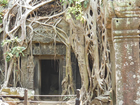 2015 The Entrance at Ta Prohm used by Lara Croft: Tomb Raider in the 2001 film