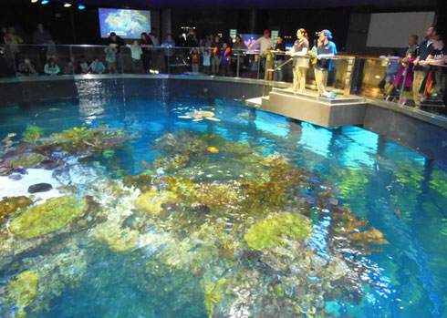 New England Aquarium's Giant Tank Turtle Feeding was a Highlight of the Morning