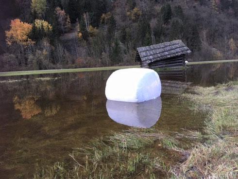 Ursache Klima(erwärmung) oder als Fischfutter gedacht ? ... gesehen von Hansi an der B106