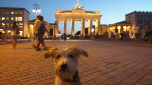 Am Brandenburger Tor - etwas verschwommen, ich hatte keine Lust mehr auf Bilder