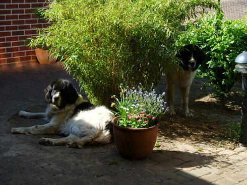 Lina und Ida Frühjahr 2011
