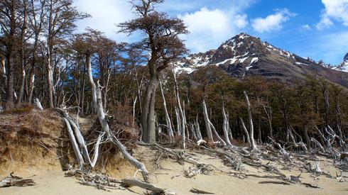 Die Ostseite der Anden ist offenbar doch eher trocken.