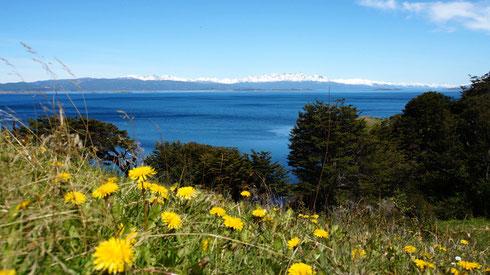 Da drüben ist die Isla Navarino mit dem Dientes Circuit. So nah und doch unerreichbar.