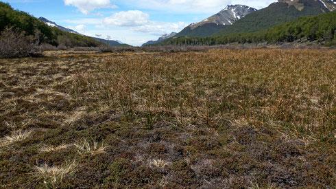 Der Weg dorthin führt über ausgedehnte Moor Flächen.