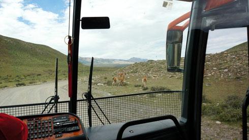 Busfahrt zurück nach Puerto Natales