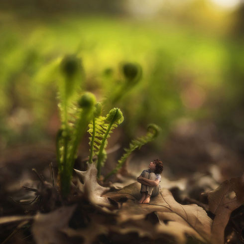 """""""Fiddle Oak""""の写真より"""