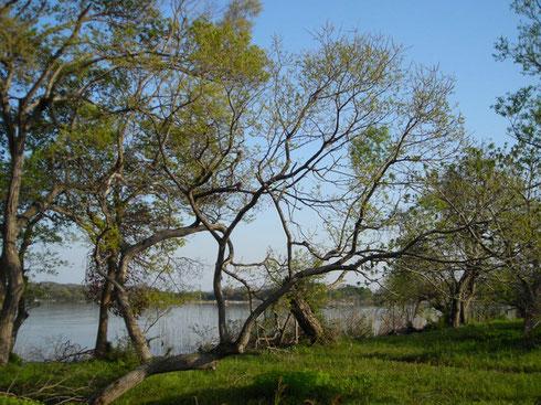 琵琶湖西岸 北 新旭野鳥観察センター