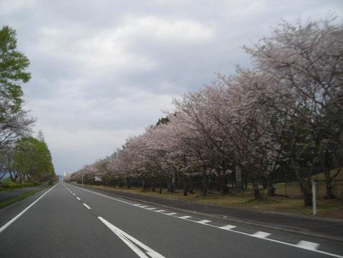 琵琶湖東岸 湖岸道路(佐川美術館近く)