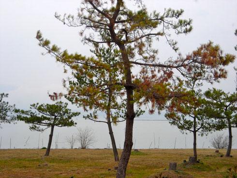 琵琶湖 東岸