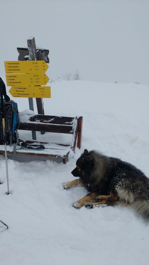 Am Gipfel des Korein, ideales Hundewetter, dafür schöner Schnee