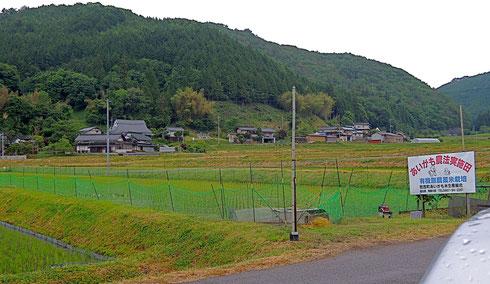 哲西町のアイガモ農法の田んぼ