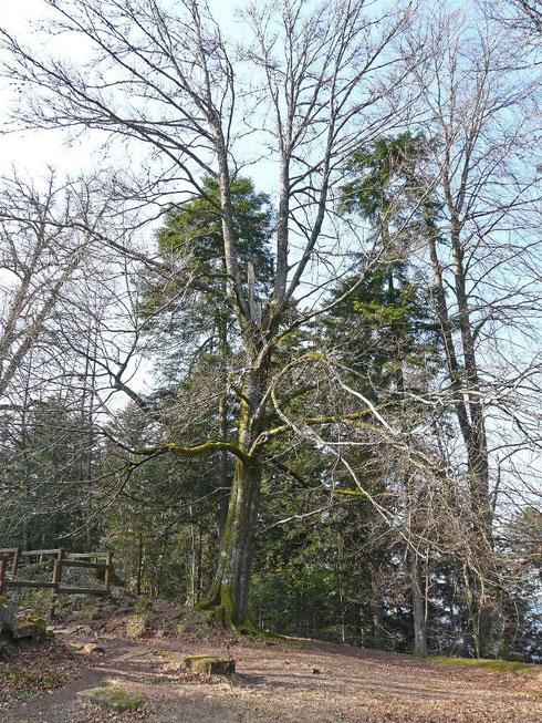 L'arbre-totem