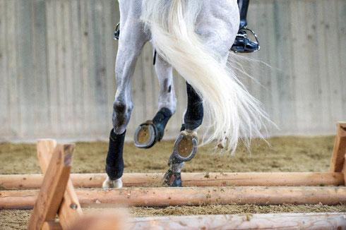 Foto: Lisa Rädlein, cavallo.de