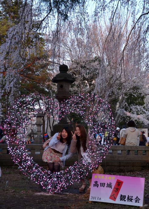 しだれ桜にサプライズ 粋なハートに観桜会盛り上がる