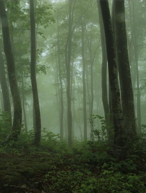 【推薦】 49 静寂の訪れ 山本勝