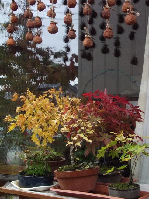 我が家の庭にも秋が、、