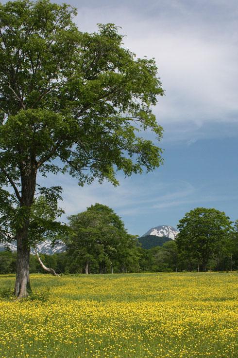 初夏の笹ヶ峰