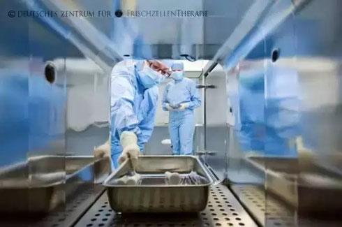 德国鲜活细胞治疗中心 羊胎素 胚胎脐血免疫干细胞 美容养颜抗衰老 GMP实验室