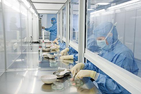 德国鲜活细胞治疗中心 羊胎素 胚胎脐血免疫干细胞 美容养颜抗衰老 注射制剂 提炼