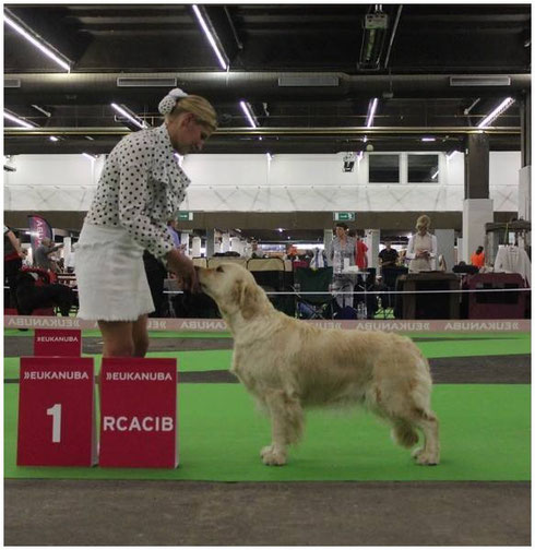 Multi Ch.Butterfl'Highland Feu Follette ,1ere classe champion ,RCACIB
