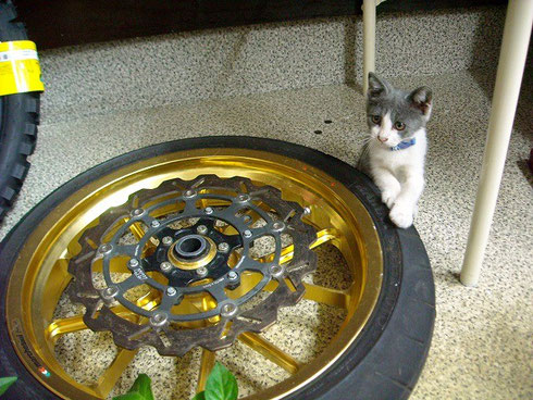 カギの救助隊福岡南本店の猫