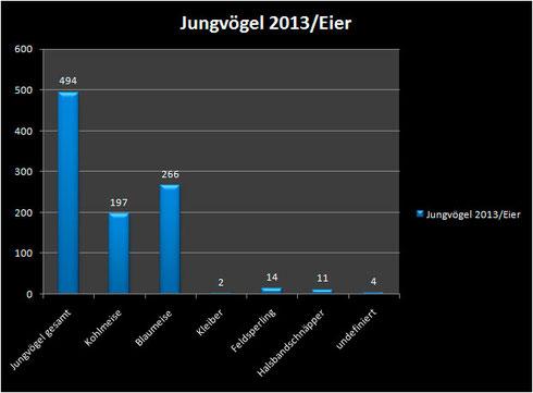 Jungvögel 2013