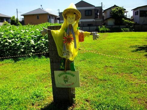 東大農場正門を通ったすぐのところ。案山子のお出迎え。 2012.6