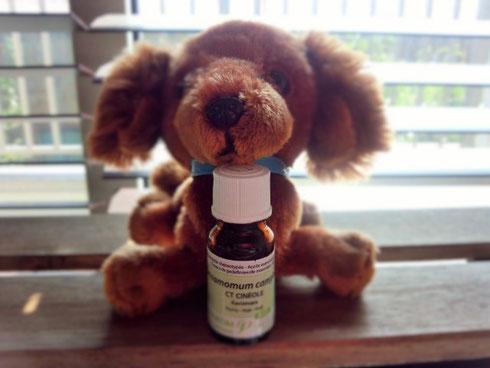 免疫促進作用のあるラヴィンツァラは人にもペットにもお勧めの精油です