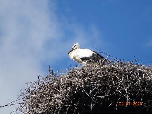 Nesthäkchen Mia alleine im Nest!  Foto: Ulrike Mose
