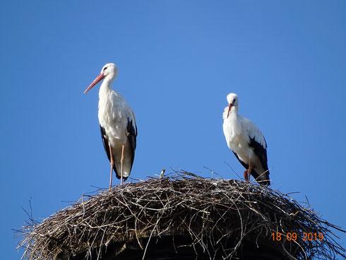 Storchenpaar hält weiterhin die Stellung!  Foto: Ulrike Mose