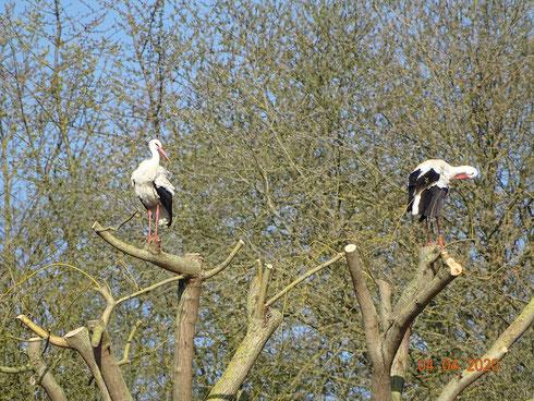 Ruheplatz auf einem Baum.  Foto: Ulrike Mose