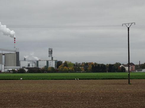 Blick auf die Zuckerfabrik Wabern (links) und unseren Schornstein mit Storchennest (rechts).  Foto: Ulrike Mose
