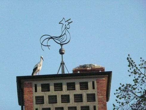 Respektvoller Abstand zum neuen Nest.   Foto: Ulrike Mose