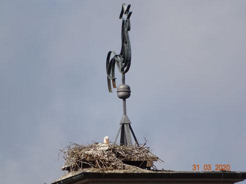 Auf dem Glockenturm wird gebrütet. Foto: Ulrike Mose